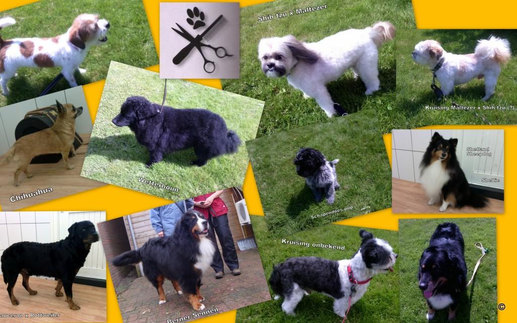 De trimsalon voor grote en kleine honden